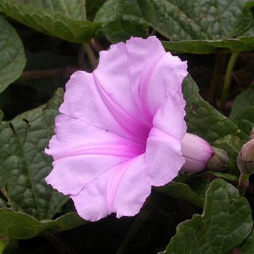 scotland robert flower 3